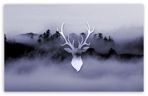 Misty Deer 4k Hd Desktop Wallpaper For 4k Ultra Hd Tv