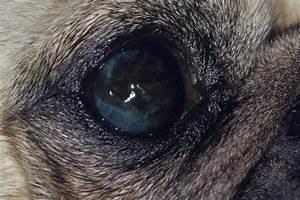 Cornea - Eye And Ear