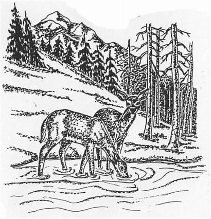 Stream Deer Mountain Scene Wildlife Stamps Rubber