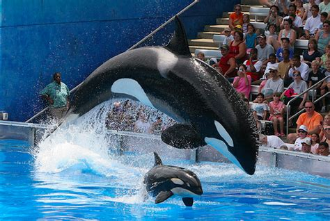 """San antonio is home to branches of texas a&m, university of texas, the alamo community colleges, and religious universities including. SeaWorld San Diego Will Phase Out """"Shamu Show"""" For One ..."""