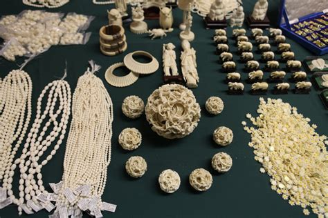 illegal ivory leads   plead guilty   york