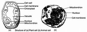ncert solutions for class 8 science cell structure and With structure of cell part 3 pass science solutions