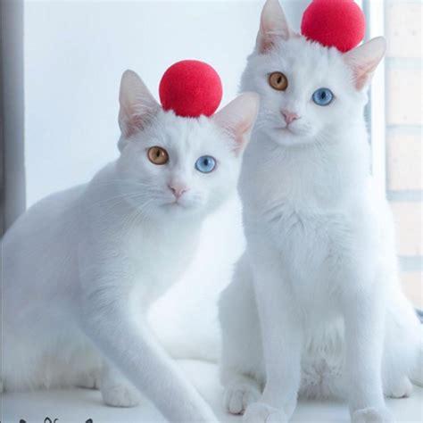 jeux de cuisine de noel chats jumeaux et d 39 instagram