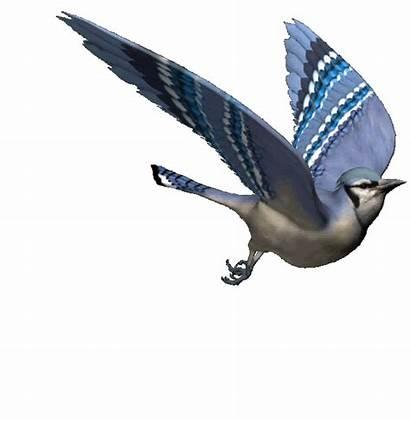 Bird Animated Birds Animals Gifs Animations