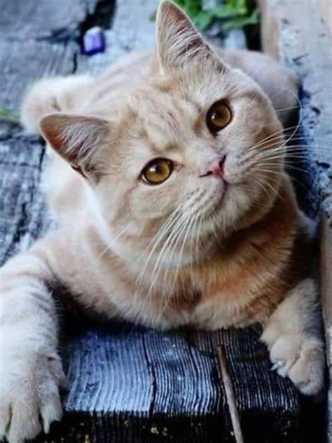 cats pretty why animals aks dat did