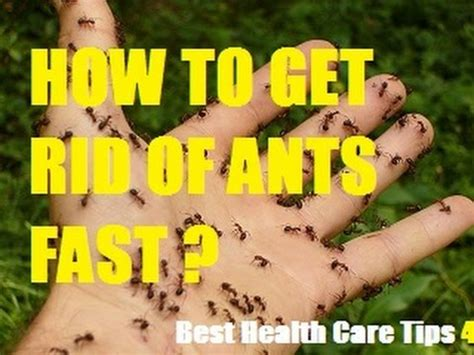 how to get rid of ants in the house how to get rid of ants in the kitchen naturally how to