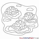 Cabbage Coloring Colouring Pages Farm Sheet Title sketch template