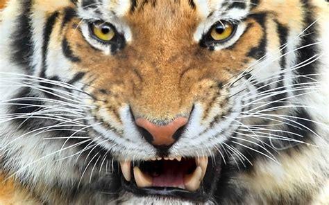 Wild Animals Any Photo Album