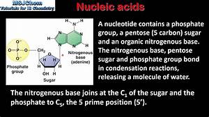 B 8 Nucleic Acids    Polynucleotides