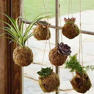Kokedama Hanging String Gardens Home Accents VivaTerra