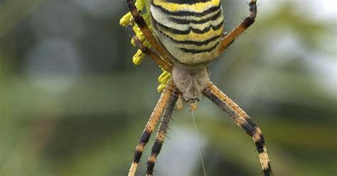 Wie Hält Mücken Fern by Wie Spinnen Aus Der Wohnung Fern H 228 Lt