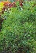 jenis jenis tanaman hias kucobacom