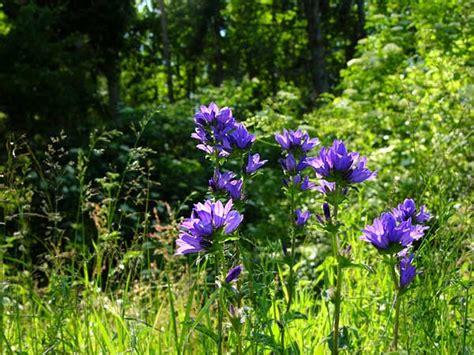 fiori di bach costi fiori di bach contro l ansia
