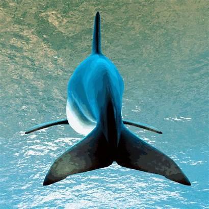 Dolphin 3d Scene Underwater Cyan Nhs Hospital