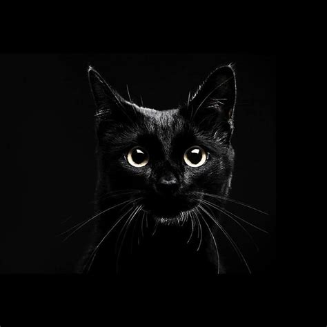 black live wallpapers android black cats live wallpaper apk free