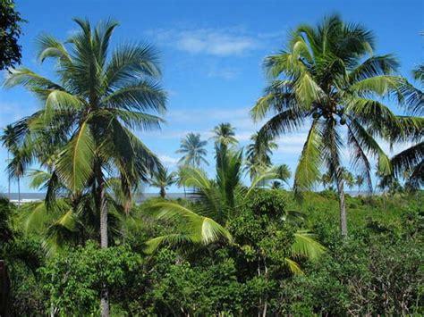 Картинки кокосовое печенье