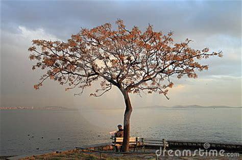 man  tree stock images image