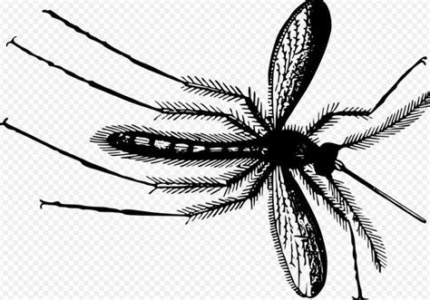 les 25 meilleures id 233 es de la cat 233 gorie moucherons plantes