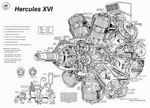 Knucklehead Engine Diagram