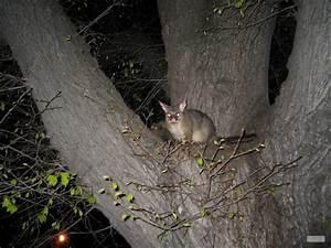 Possum Bite On Cat