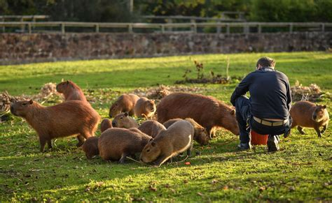 european prof zookeeper qualification framework eaza