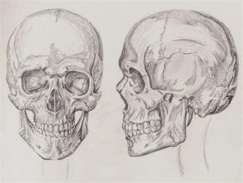 Othrographic Skull Proportions Anthropometrics