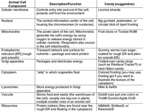 animal cell functions chart