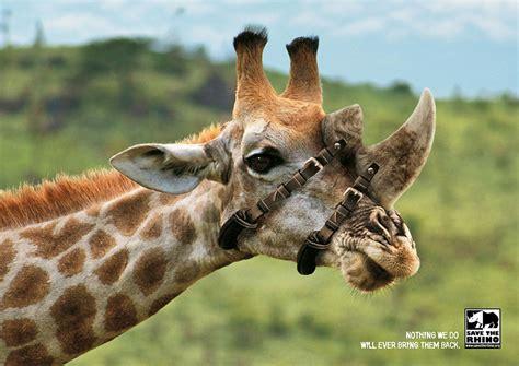 shocking animal ad campaigns     rethink