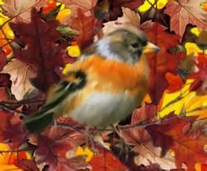 Autumn Desktop Wallpaper with Birds