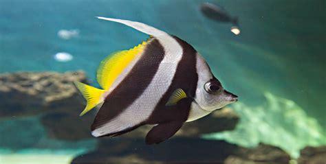 aquarium le 7eme continent aquarium le 7 232 me continent talmont st hilaire sorties nature