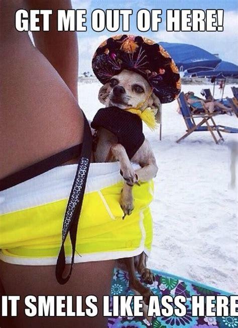 bikini butt sniffing dog side saddle  sombrero smells