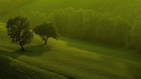 30 unique and beautiful green wallpapers for