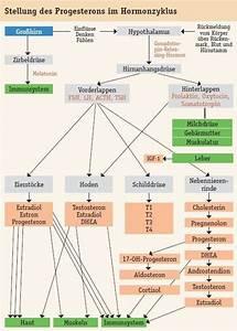 pflanzliche hormone bei wechseljahrsbeschwerden