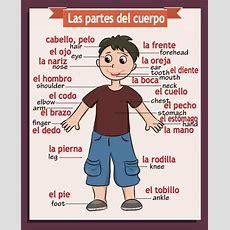 Spanishenglish Classroom Poster Body Parts