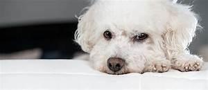 Ich Suche Einen Großen Hund : allergikerhunde hund trotz allergie halten tierisch wohnen ~ Jslefanu.com Haus und Dekorationen
