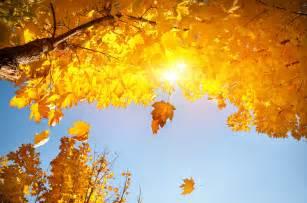 Fall Season