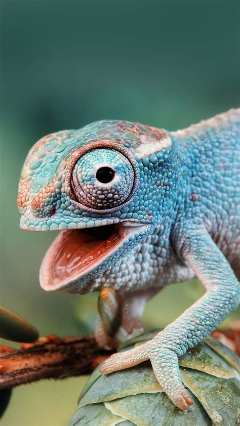 cute chameleon  htc  wallpapers   easy