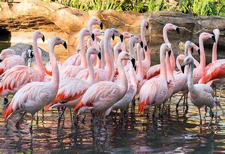 march   flamingos    flamingo dating