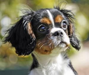 Cute Animals: Top 20 Cutest Dog Breeds | Amazing Creatures