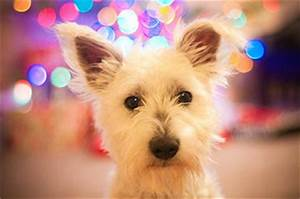 The Risk of Buying a Pet as a Christmas Gift