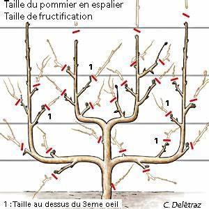 Quand Planter Un Pommier : comment et quand tailler un cerisier ou arbre fruitier ~ Dallasstarsshop.com Idées de Décoration