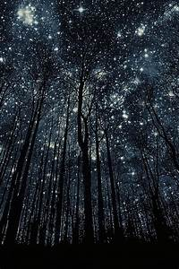 Starry forest... | Places and spaces i would love to ...