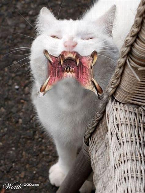 scary photoshop  animals  pics
