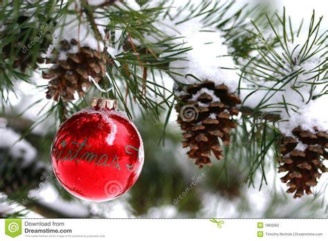 Draußen Weihnachten by Rote Weihnachtsdekoration Auf Snow Covered Kiefer Drau 223 En