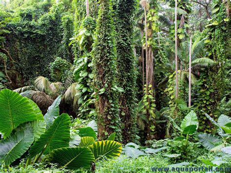 Forêt Définition, Importance, Photos
