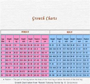 Labrador Puppy Weight Growth Chart Dogs Breeds And