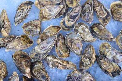 oysters  whitstable kent betterfood