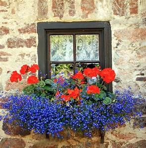 Herbstliche Blumenkästen Bilder : 172 besten blumenk sten bilder auf pinterest ~ Lizthompson.info Haus und Dekorationen