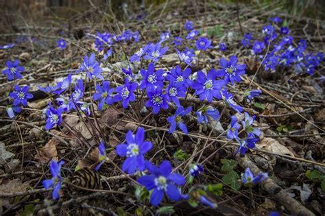 Pavasara atmodas svētki - Māras diena; svētku ticējumi ...