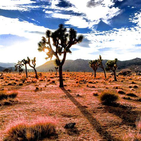 Joshua Tree National Park California Vacayhack